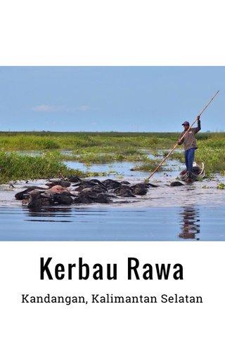Kerbau Rawa Kandangan, Kalimantan Selatan