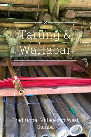 Tarung & Waitabar Traditional Villages in West Sumba