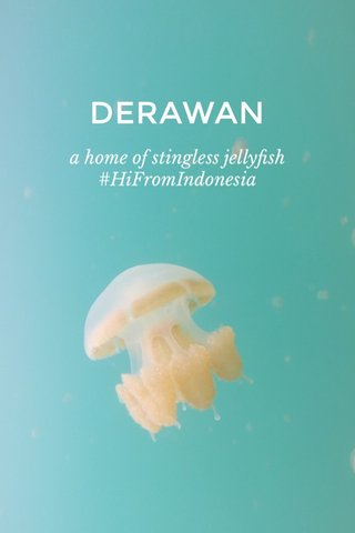 DERAWAN a home of stingless jellyfish #HiFromIndonesia