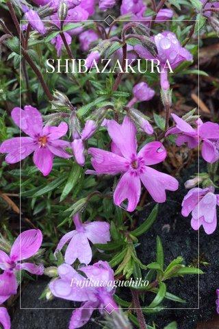 SHIBAZAKURA Fujikawaguchiko