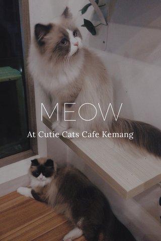 MEOW At Cutie Cats Cafe Kemang