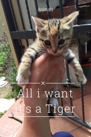 All i want it's a Tiger Animals