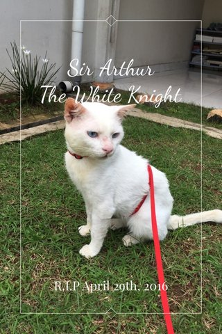 Sir Arthur The White Knight R.I.P April 29th, 2016