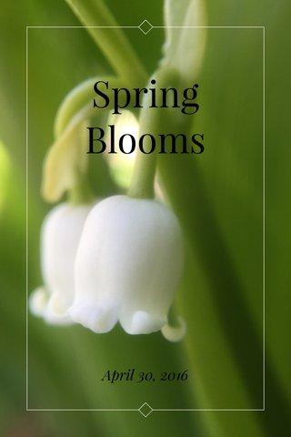 Spring Blooms April 30, 2016