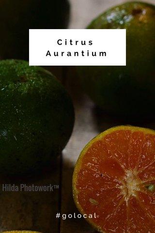 Citrus Aurantium #golocal