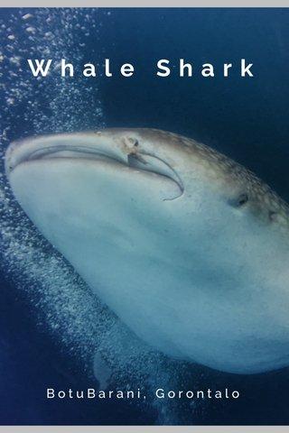 Whale Shark BotuBarani, Gorontalo