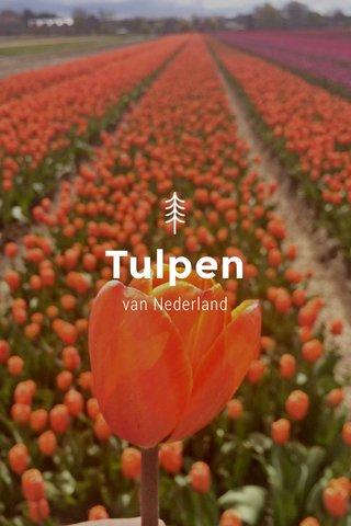 Tulpen van Nederland