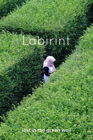 Labirint lost in the green wall