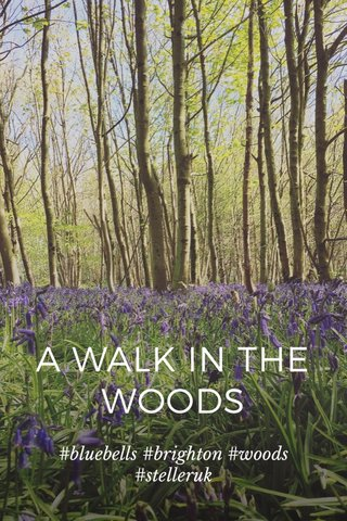 A WALK IN THE WOODS #bluebells #brighton #woods #stelleruk