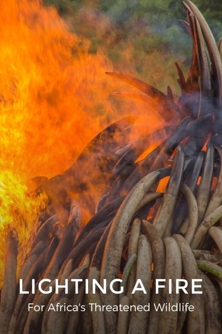 LIGHTING A FIRE For Africa's Threatened Wildlife