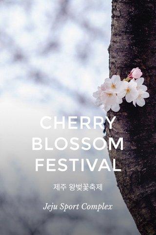 CHERRY BLOSSOM FESTIVAL 제주 왕벚꽃축제 Jeju Sport Complex