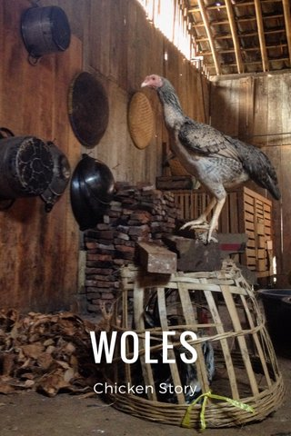 WOLES Chicken Story