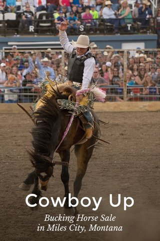 Cowboy Up Bucking Horse Sale in Miles City, Montana