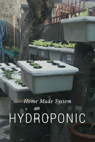 HYDROPONIC Home Made System