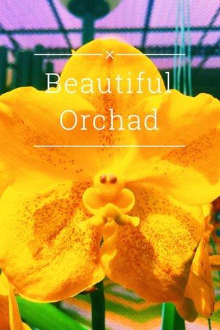 Beautiful Orchad