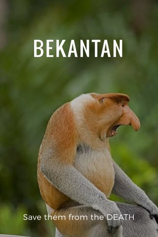 BEKANTAN Save them from the DEATH