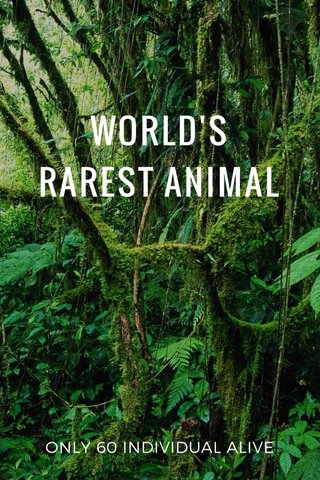 WORLD'S RAREST ANIMAL ONLY 60 INDIVIDUAL ALIVE