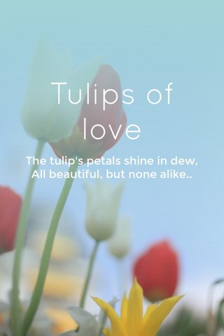 Tulips of love The tulip's petals shine in dew, All beautiful, but none alike..