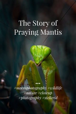The Story of Praying Mantis ••• #macrophotography #wildlife #nature #closeup #photography #stellerid
