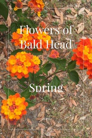 Flowers of Bald Head Spring 2016 2016