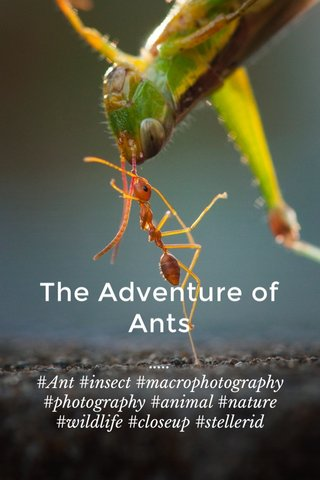 The Adventure of Ants ..... #Ant #insect #macrophotography #photography #animal #nature #wildlife #closeup #stellerid
