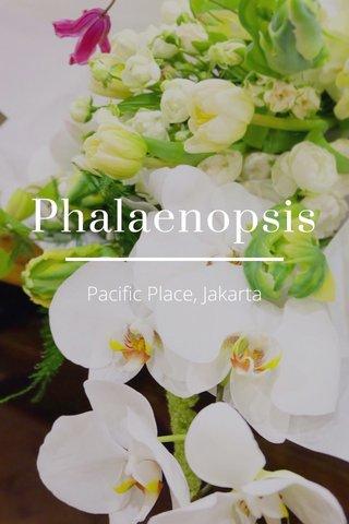Phalaenopsis Pacific Place, Jakarta