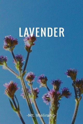 LAVENDER -Mt. Welirang-