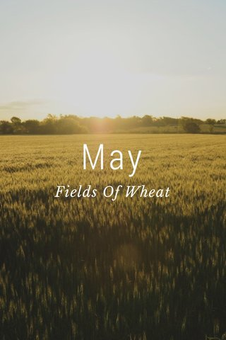 May Fields Of Wheat