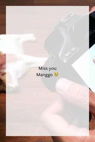 Miss you Manggo 😿