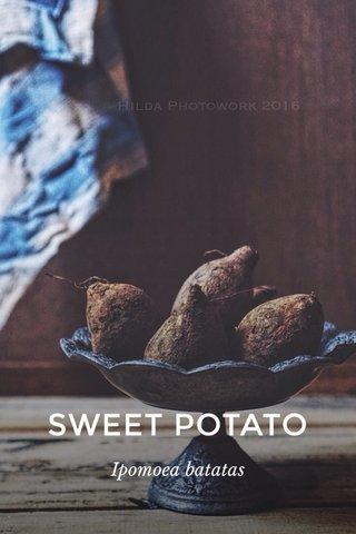 SWEET POTATO Ipomoea batatas