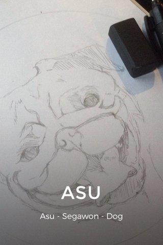ASU Asu - Segawon - Dog