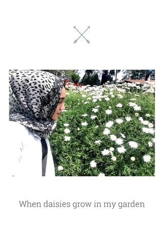 When daisies grow in my garden