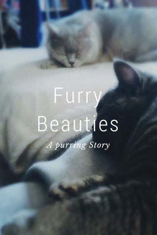 Furry Beauties A purring Story