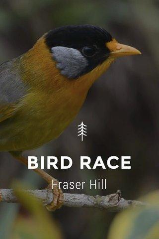BIRD RACE Fraser Hill
