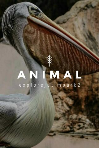 ANIMAL explorejatimpark2