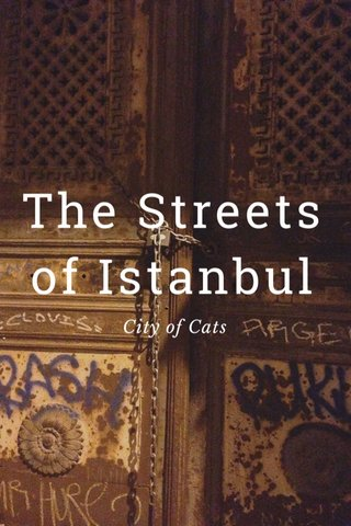 The Streets of Istanbul City of Cats