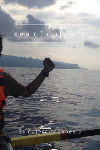sea of dolphin Sumatera-Indonesia
