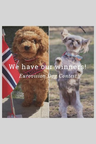 We have our winners! Eurovision Dog Contest