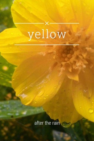 yellow after the rain