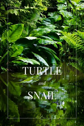 TURTLE SNAIL and