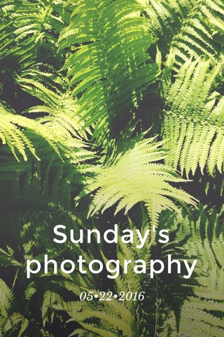 Sunday's photography 05•22•2016