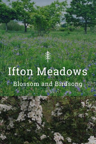 Ifton Meadows Blossom and Birdsong