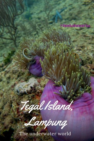 Tegal Island, Lampung The underwater world