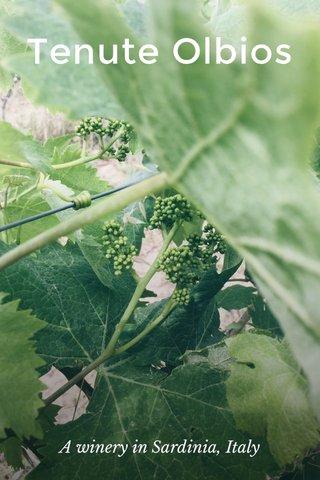 Tenute Olbios A winery in Sardinia, Italy
