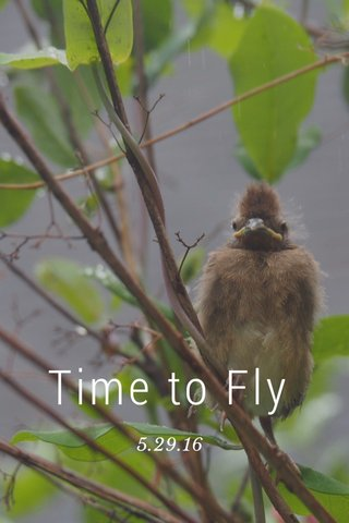 Time to Fly 5.29.16