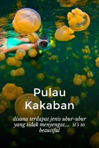 Pulau Kakaban disana terdapat jenis ubur-ubur yang tidak menyengat.... it's so beautiful