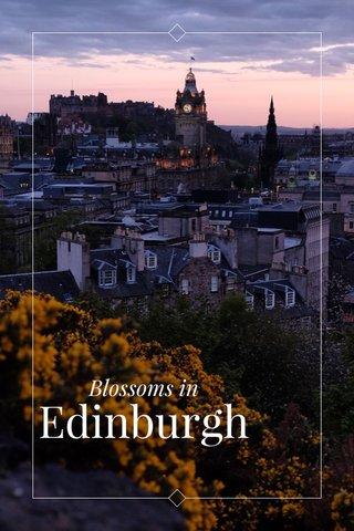 Edinburgh Blossoms in