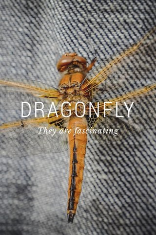 DRAGONFLY They are fascinating