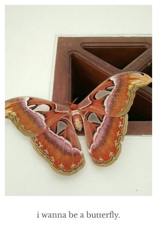 i wanna be a butterfly.
