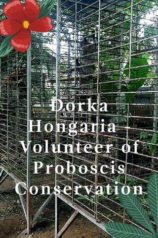 Dorka Hongaria - Volunteer of Proboscis Conservation